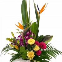 vogue-in-a-vase-corporte-flowers-2