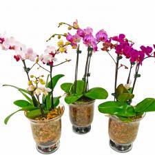 Orchid Plant Vase vogue in a vase florist